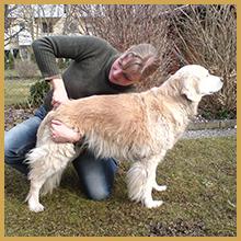 rethorst-chiropraktik-hunde