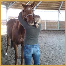 rethorst-chiropraktik-pferde-blockade