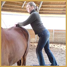 rethorst-chiropraktik-ursache-blockade-pferde